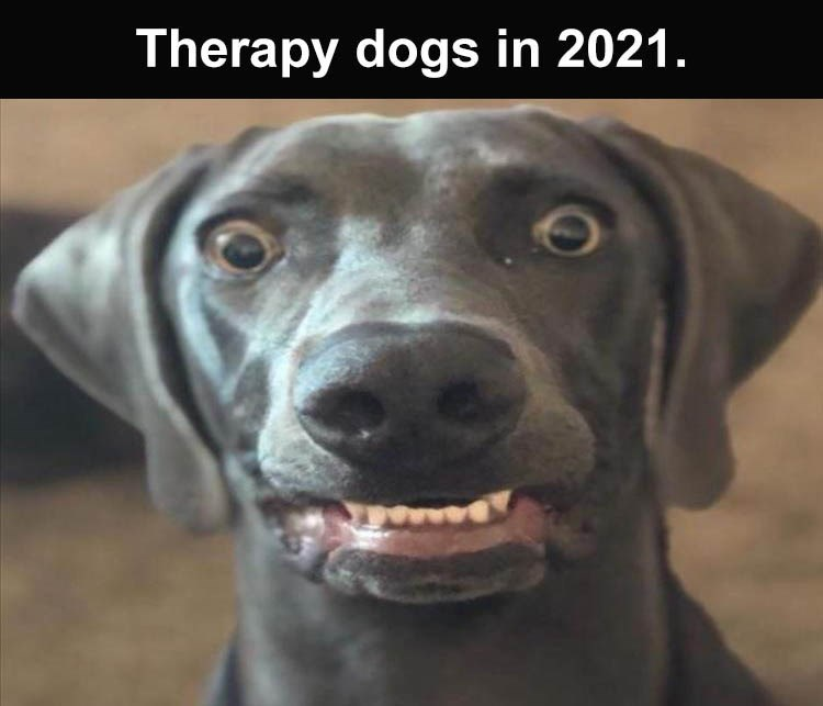 Dog - Therapy dogs in 2021.