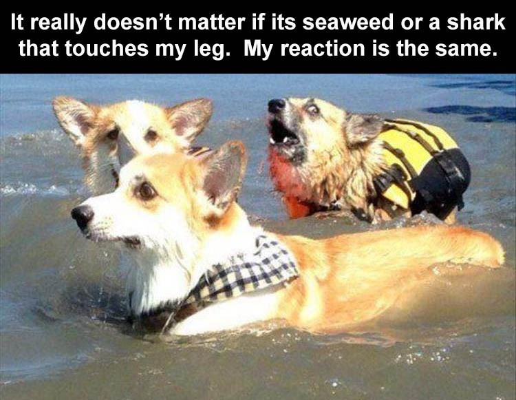 Canidae - It really doesn't matter if its seaweed or a shark that touches my leg. My reaction is the same.