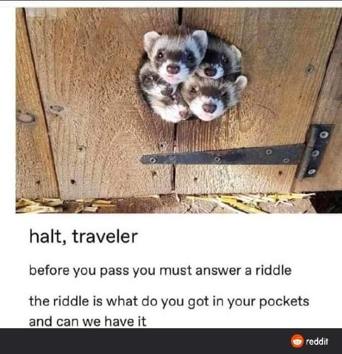 Text - halt, traveler before you pass you must answer a riddle the riddle is what do you got in your pockets and can we have it reddit
