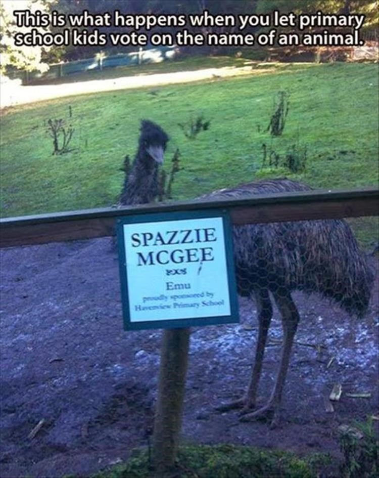 Text - This is what happens when you let primary school kids vote on the name of an animal. SPAZZIE MCGEE Emu Hevenview Prinmary School 4 poaoaods Apnoud