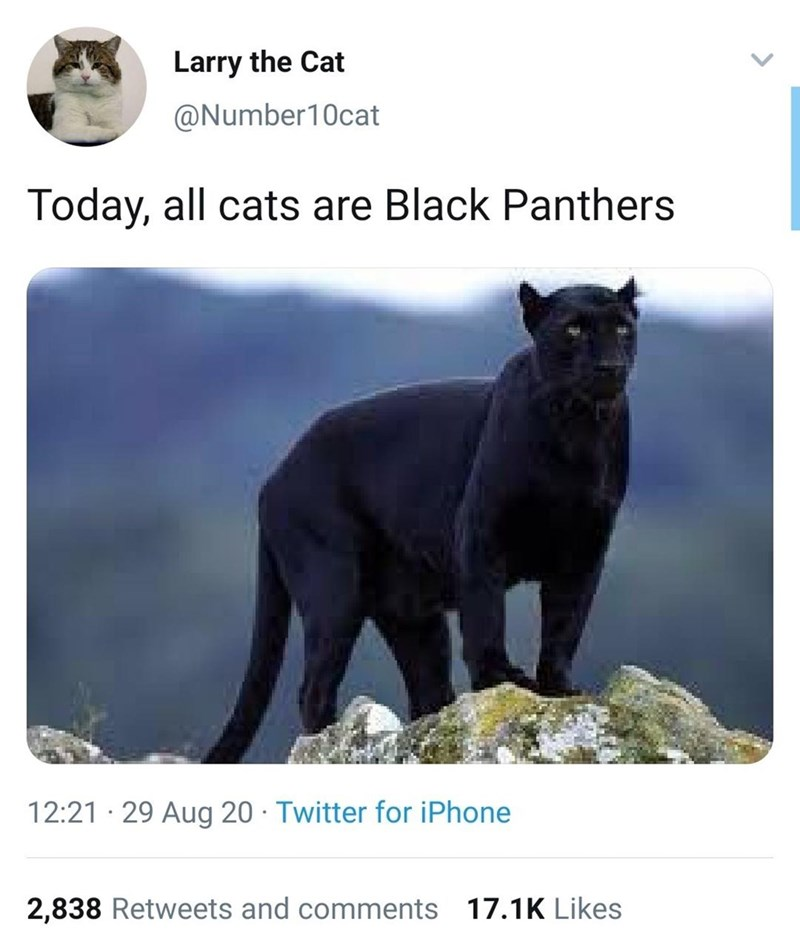 Vertebrate - Larry the Cat @Number10cat Today, all cats are Black Panthers 12:21 · 29 Aug 20 · Twitter for iPhone 2,838 Retweets and comments 17.1K Likes