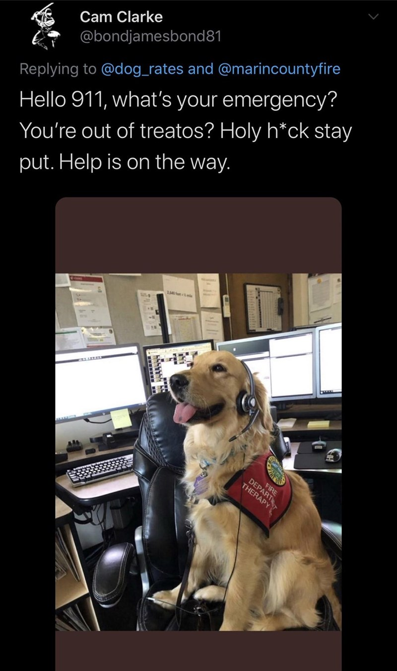 Text - Dog - Cam Clarke @bondjamesbond81 Replying to @dog_rates and @marincountyfire Hello 911, what's your emergency? You're out of treatos? Holy h*ck stay put. Help is on the way. FIRE DEPART THERAPY ii小1