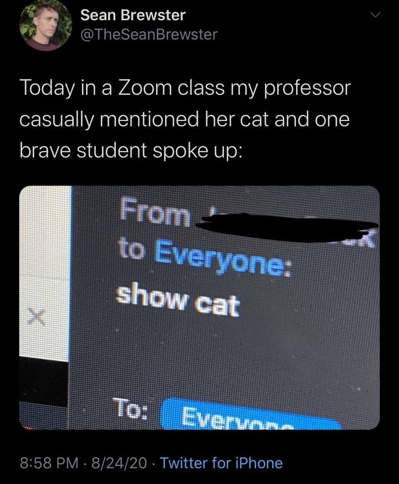 Text - Text - Sean Brewster @TheSeanBrewster Today in a Zoom class my professor casually mentioned her cat and one brave student spoke up: From- to Everyone: show cat To: Everw 8:58 PM · 8/24/20 · Twitter for iPhone