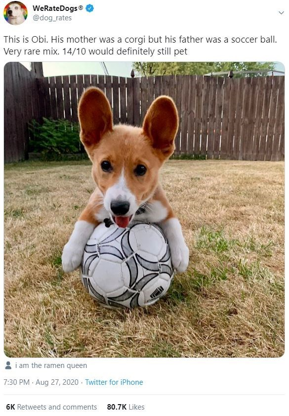 Text - Dog - WeRateDogs® @dog_rates This is Obi. His mother was a corgi but his father was a soccer ball. Very rare mix. 14/10 would definitely still pet i am the ramen queen 7:30 PM · Aug 27, 2020 · Twitter for iPhone 6K Retweets and comments 80.7K Likes