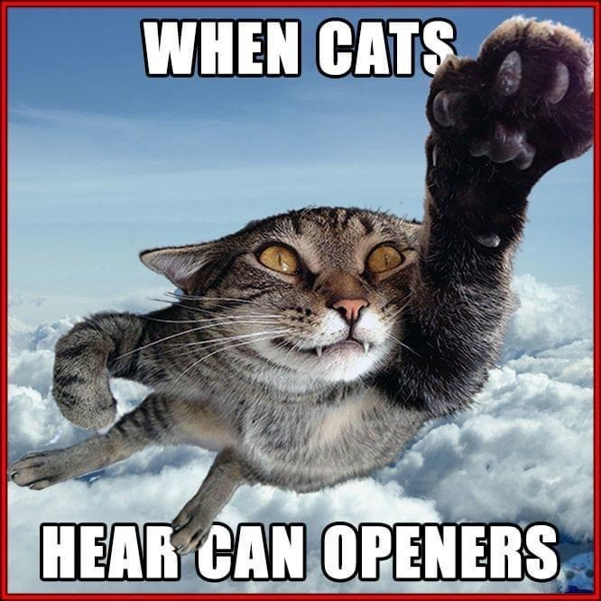 Photo caption - WHEN CATS HEAR CAN OPENERS