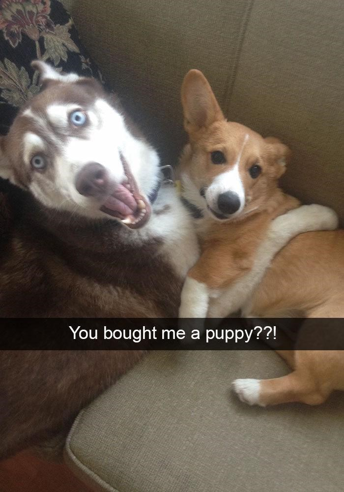 Dog - You bought puppy??! me a