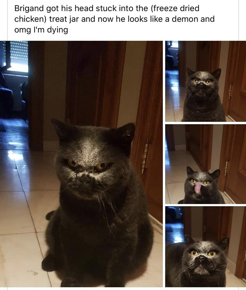 Cat - Brigand got his head stuck into the (freeze dried chicken) treat jar and now he looks like a demon and omg l'm dying