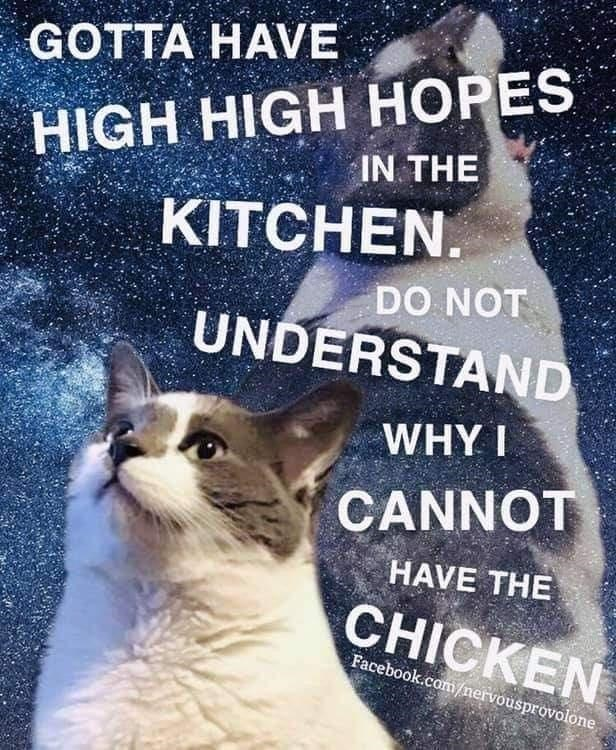 Cat - GOTTA HAVЕ HIGH HIGH HOPES IN THE KITCHEN. DO NOT UNDERSTAND WHY I CANNOT HAVE THE CHICKEN Facebook.com/nervousprovolone