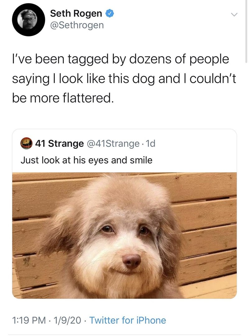 Dog - Seth Rogen O @Sethrogen I've been tagged by dozens of people saying I look like this dog and I couldn't be more flattered. 41 Strange @41Strange · 1d Just look at his eyes and smile 1:19 PM · 1/9/20 · Twitter for iPhone