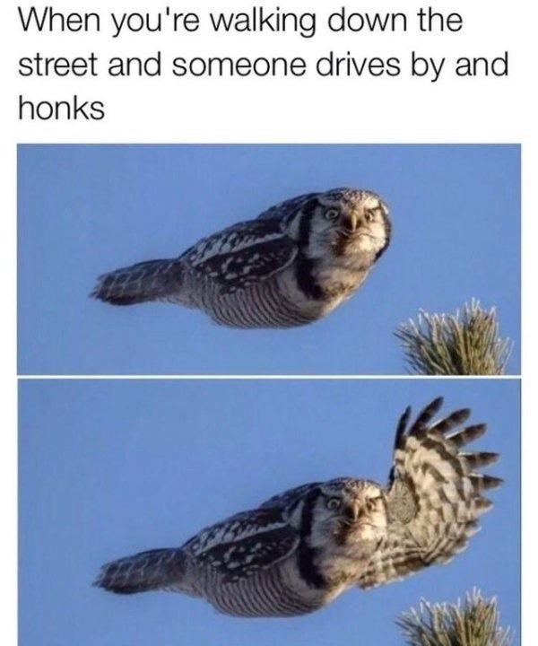 Bird - When you're walking down the street and someone drives by and honks