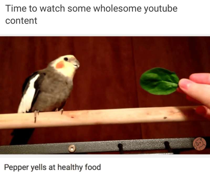 Bird - Time to watch some wholesome youtube content Pepper yells at healthy food