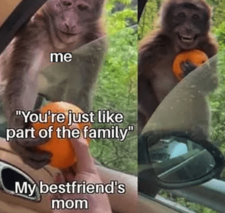 """Primate - me """"You're just like part of the family"""" My bestfriend's mom"""
