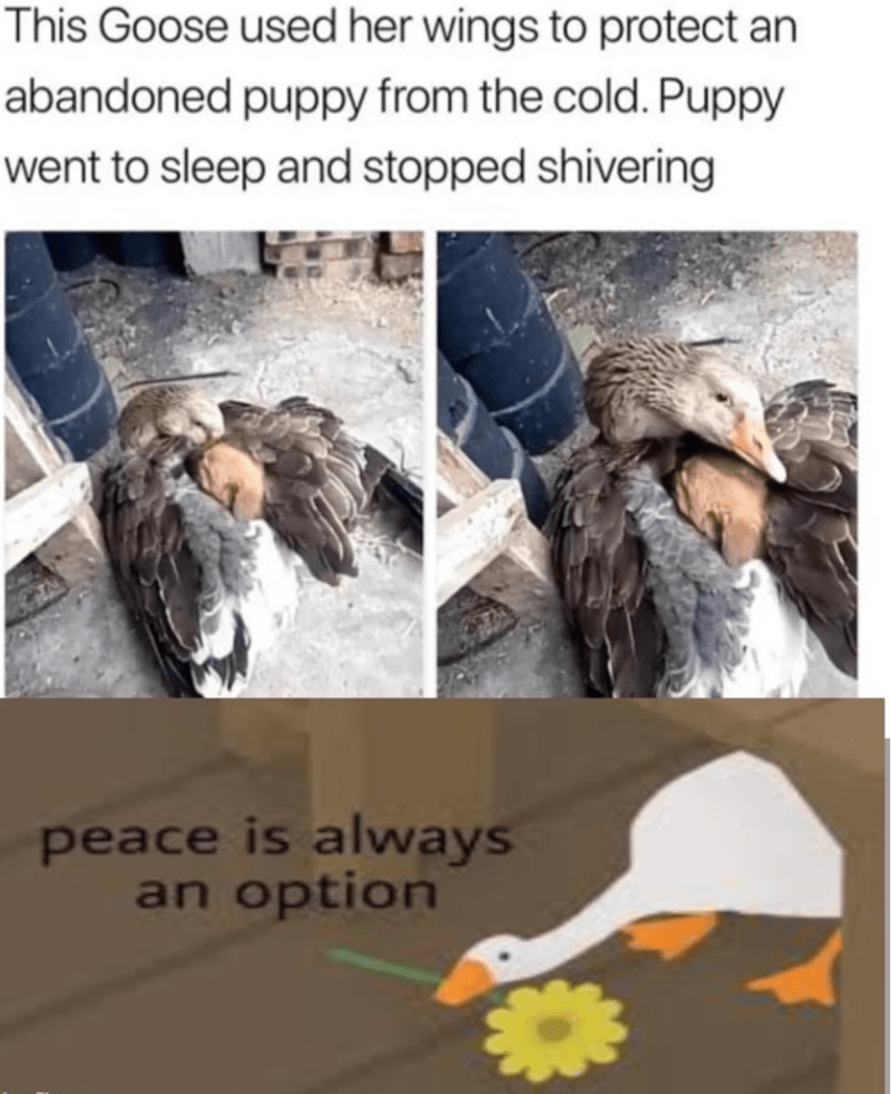 Text - This Goose used her wings to protect an abandoned puppy from the cold. Puppy went to sleep and stopped shivering peace is always an option