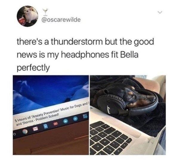"""Product - @oscarewilde there's a thunderstorm but the good news is my headphones fit Bella perfectly 5 Hours of """"Anxiety Prevention Music for Dogs and and Storms - Problem Solved! >"""