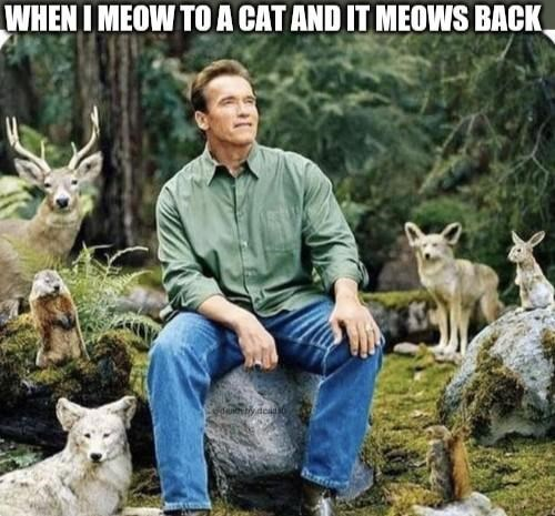 Wildlife - WHEN I MEOW TO A CAT AND IT MEOWS BACK