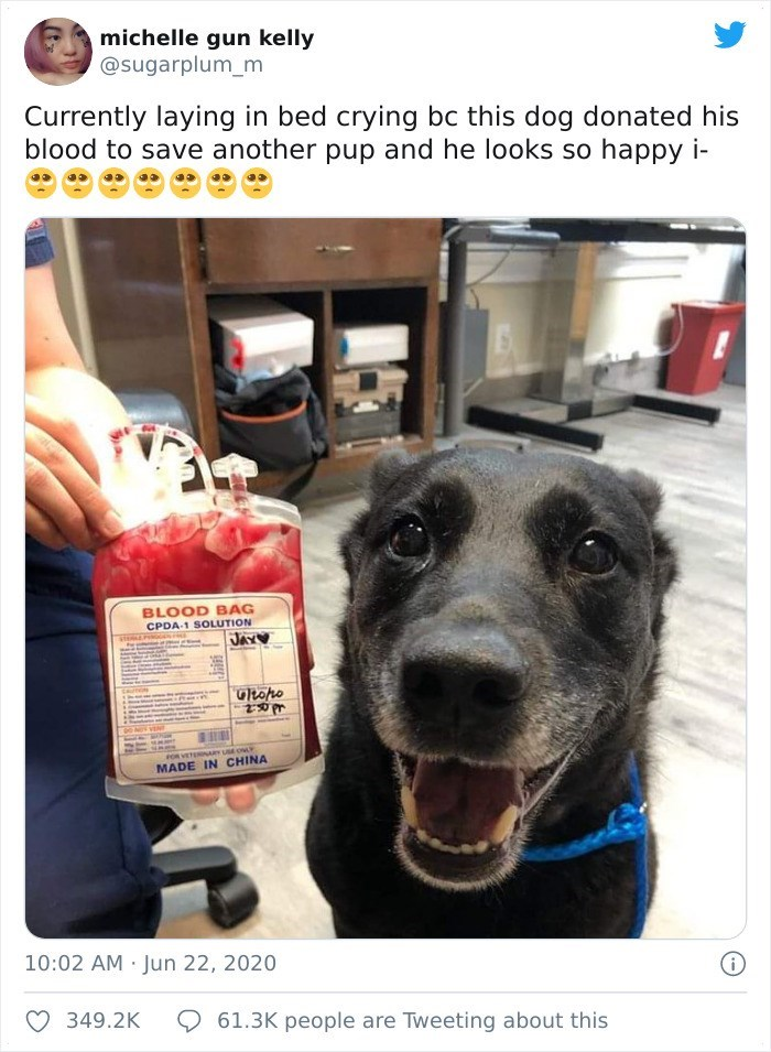 Dog breed - michelle gun kelly @sugarplum_m Currently laying in bed crying bc this dog donated his blood to save another pup and he looks so happy i- BLOOD BAG CPDA-1 SOLUTION JAY♡ Gltopo FOR VETERNARY U OLY MADE IN CHINA 10:02 AM Jun 22, 2020 349.2K 61.3K people are Tweeting about this