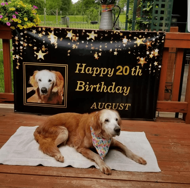 Dog - Dog - Нарру 20 th Birthday AUGUST