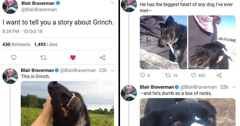 A twitter thread of Grinch, a dumb sled dog.