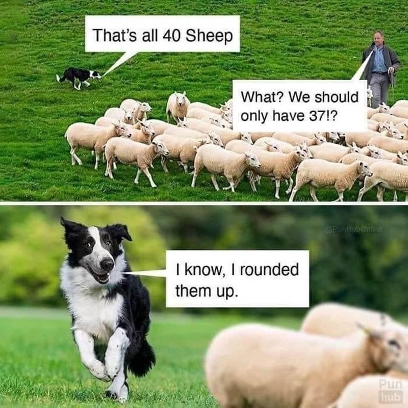 Mammal - That's all 40 Sheep What? We should only have 37!? I know, I rounded them up. Pun hub