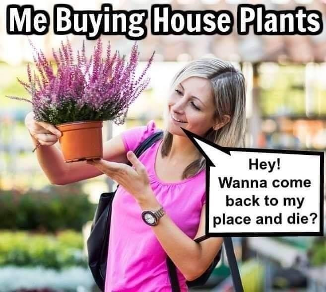 Morning - Me Buying House Plants Hey! Wanna come back to my place and die?