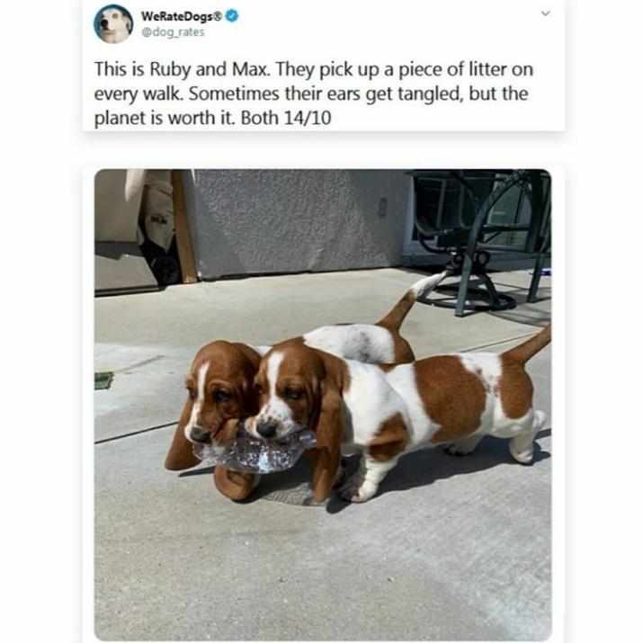 Dog - WeRateDogs0 @dog rates This is Ruby and Max. They pick up a piece of litter on every walk. Sometimes their ears get tangled, but the planet is worth it. Both 14/10