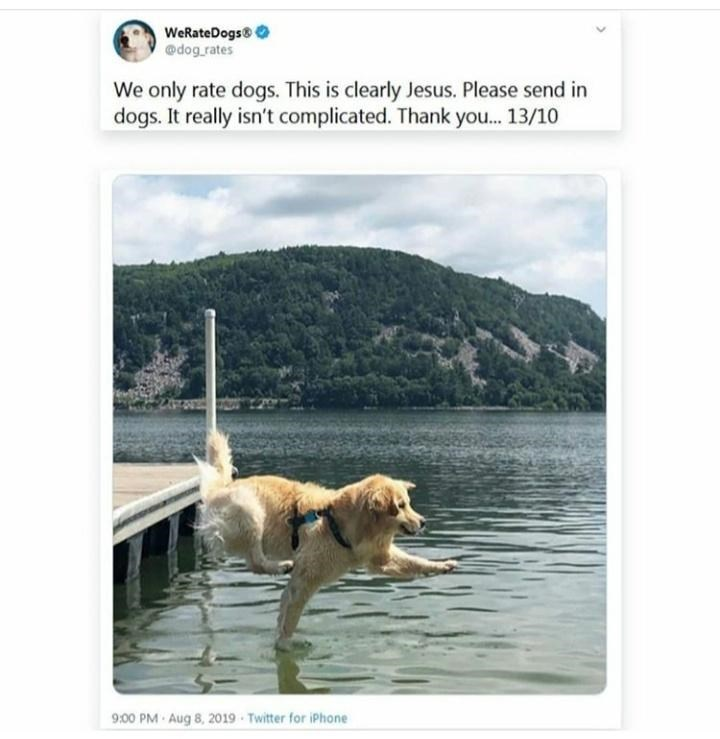 Canidae - WeRateDogs @dog rates We only rate dogs. This is clearly Jesus. Please send in dogs. It really isn't complicated. Thank you.. 13/10 9:00 PM Aug 8, 2019 Twitter for iPhone