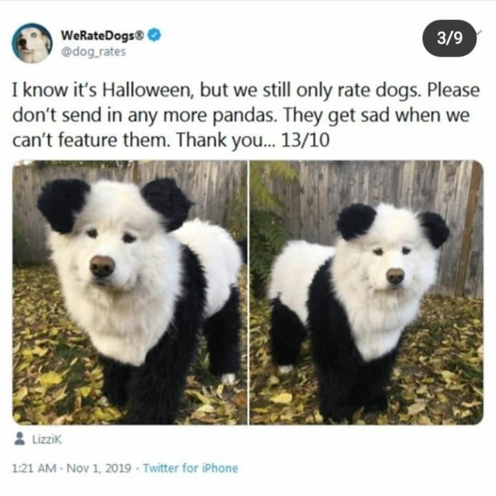 Mammal - WeRateDogs @dog_rates 3/9 I know it's Halloween, but we still only rate dogs. Please don't send in any more pandas. They get sad when we can't feature them. Thank you. 13/10 Lizzik 1:21 AM Nov 1, 2019 Twitter for iPhone