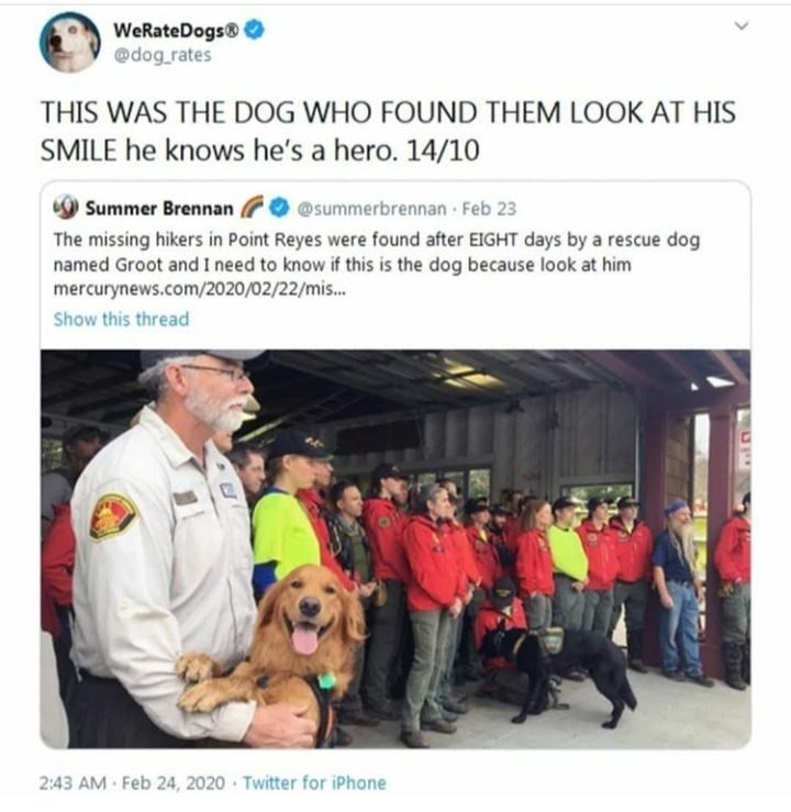 Font - WeRateDogs® @dog_rates THIS WAS THE DOG WHO FOUND THEM LOOK AT HIS SMILE he knows he's a hero. 14/10 9 Summer Brennan O @summerbrennan Feb 23 The missing hikers in Point Reyes were found after EIGHT days by a rescue dog named Groot and I need to know if this is the dog because look at him mercurynews.com/2020/02/22/mis. Show this thread 2:43 AM Feb 24, 2020 · Twitter for iPhone