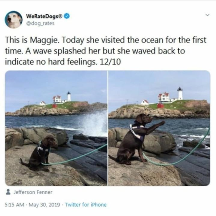 Canidae - WeRateDogs® 0 @dog_rates This is Maggie. Today she visited the ocean for the first time. A wave splashed her but she waved back to indicate no hard feelings. 12/10 Jefferson Fenner 5:15 AM - May 30, 2019 · Twitter for iPhone