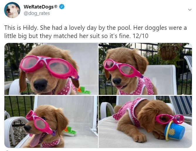 Dog - WeRateDogs® @dog_rates This is Hildy. She had a lovely day by the pool. Her doggles were a little big but they matched her suit so it's fine. 12/10