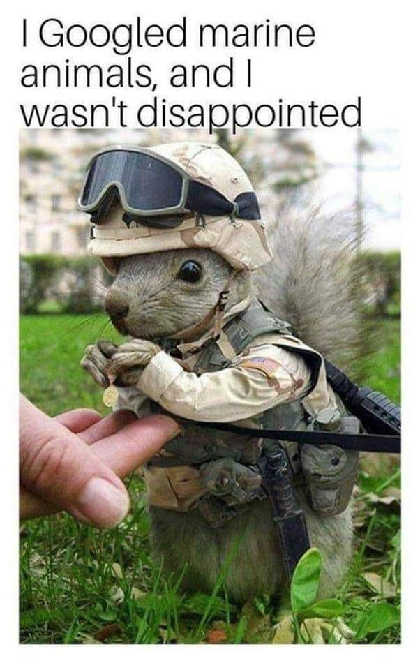 Soldier - I Googled marine animals, and I wasn't disappointed