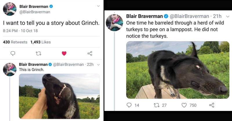Cute and funny story of a dopey sled dog named Grinch