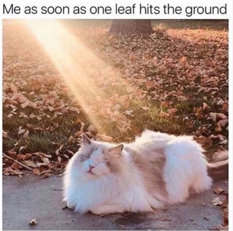 Cat - Me as soon as one leaf hits the ground