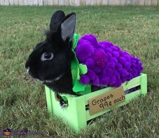 Domestic rabbit - Grapes 99¢ each Costume-Works.com