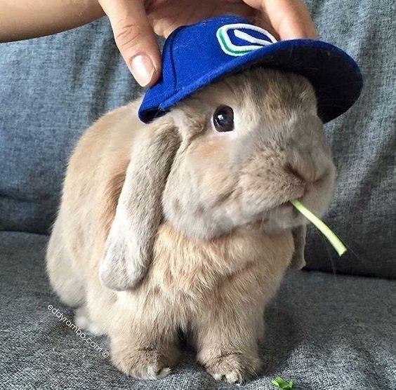 Rabbit - eddyrambo.como