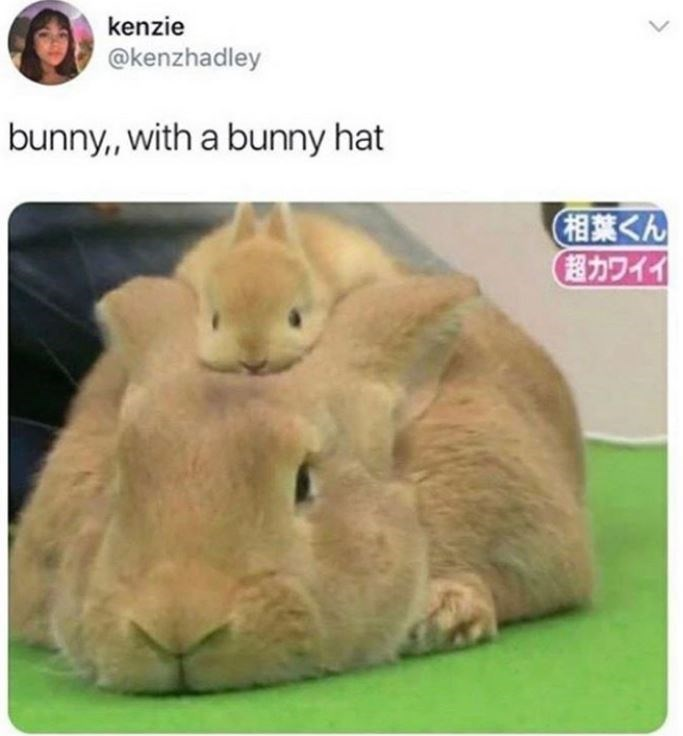 "kenzie @kenzhadley bunny"" with a bunny hat tweet tiny baby bunny sitting on the head of an older bunny"