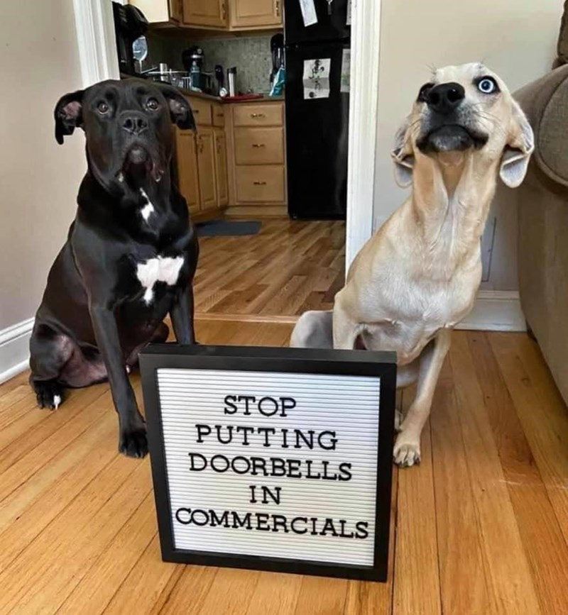 STOP PUTTING DOORBELLS IN COMMERCIALS two dogs and a sign