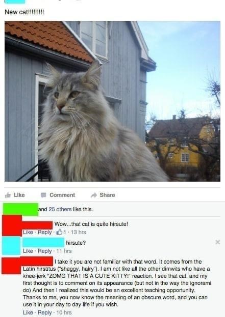 """Cat - New cat!!!!! Like Comment Share and 25 others like this. Wow.that cat is quite hirsute! Like Reply 01. 13 hrs hirsute? Like - Reply 11 hrs I take it you are not familiar with that word. It comes from the Latin hirsutus (""""shaggy, hairy""""). I am not like all the other dimwits who have a knee-jerk """"ZOMG THAT IS A CUTE KITTY!"""" reaction. I see that cat, and my first thought is to comment on its appearance (but not in the way the ignorami do) And then I realized this would be an excellent teachin"""