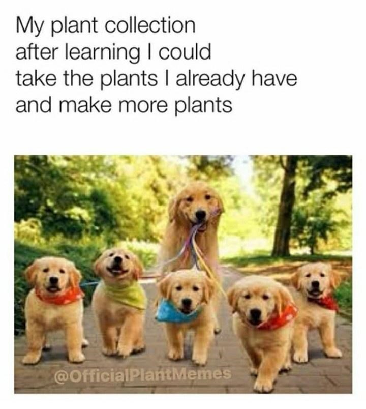 Dog - My plant collection after learning I could take the plants I already have and make more plants @OfficialPlantMemes