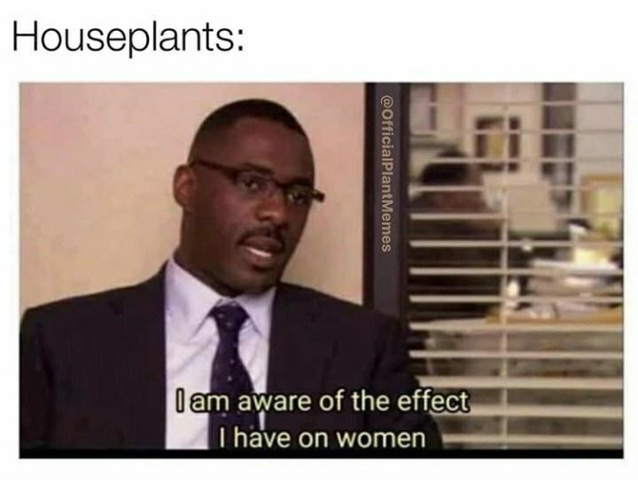 Text - Houseplants: l am aware of the effect I have on women @OfficialPlantMemes