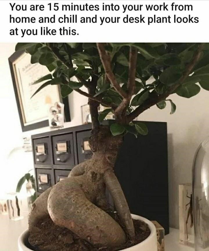 Houseplant - You are 15 minutes into your work from home and chill and your desk plant looks at you like this.