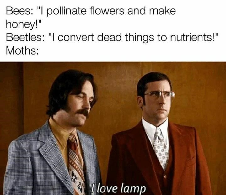 """Suit - Bees: """"I pollinate flowers and make honey!"""" Beetles: """"I convert dead things to nutrients!"""" Moths: love lamp"""