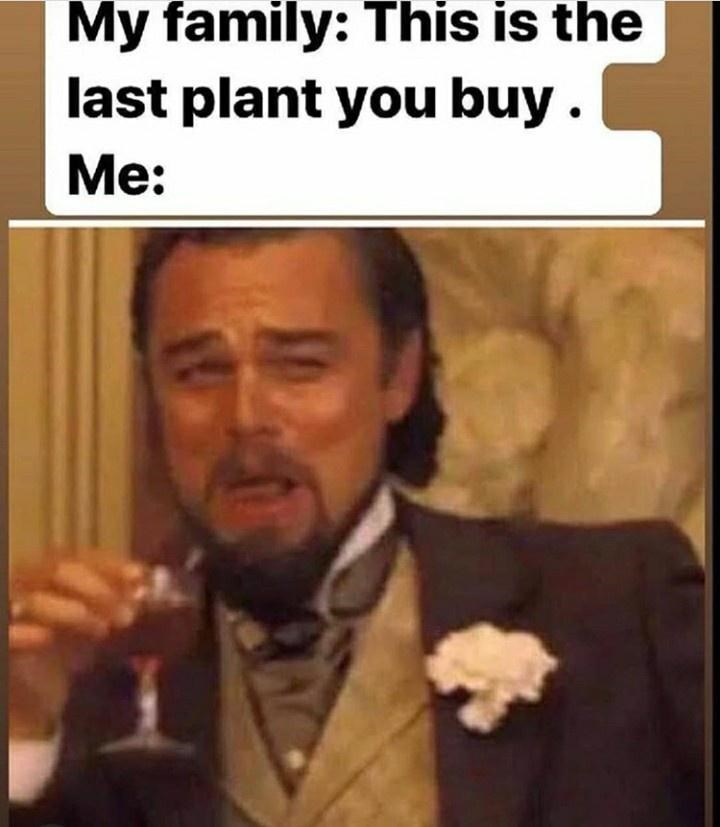 Internet meme - My family: This is the last plant you buy. Мe: