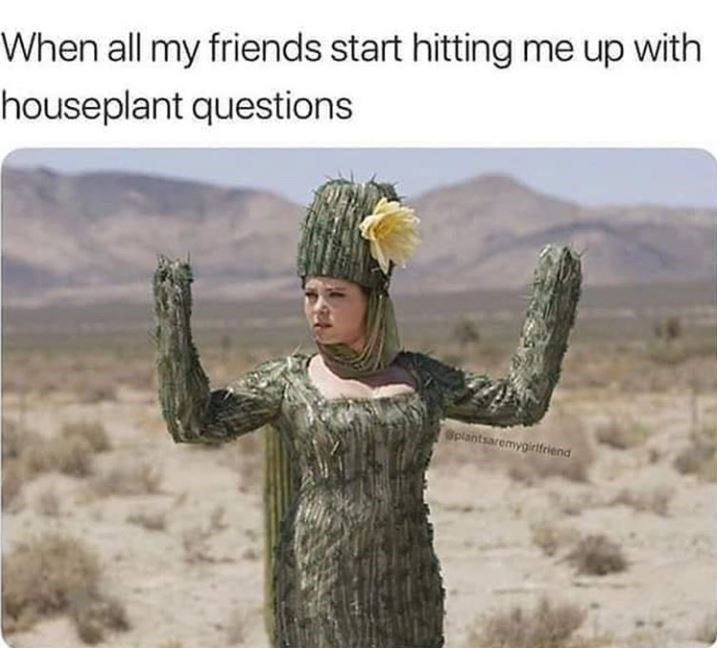 Adaptation - When all my friends start hitting me up with houseplant questions Splantsaremygirifeiend