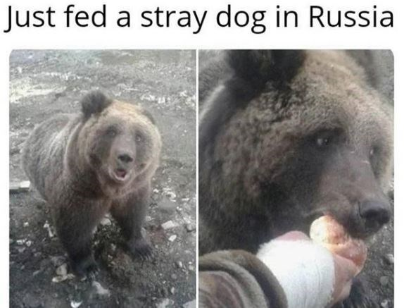 Terrestrial animal - Just fed a stray dog in Russia