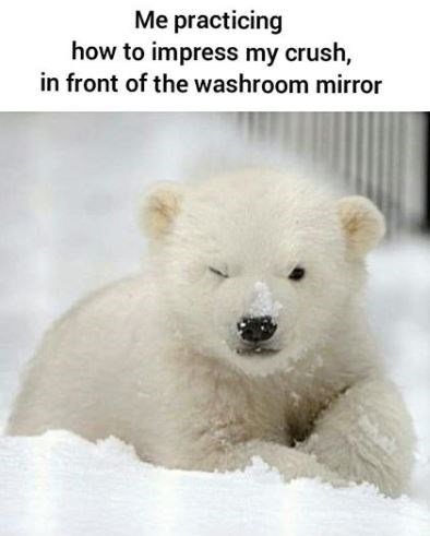 Mammal - Me practicing how to impress my crush, in front of the washroom mirror