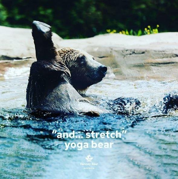 "Vertebrate - ""and stretch"" yoga bear Henney Bear AUSTRAIA"