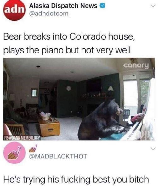 Product - adn Alaska Dispatch News @adndotcom Bear breaks into Colorado house, plays the piano but not very well canary FBCDANK MEMEOLOGY @MADBLACKTHOT He's trying his fucking best you bitch CHXO