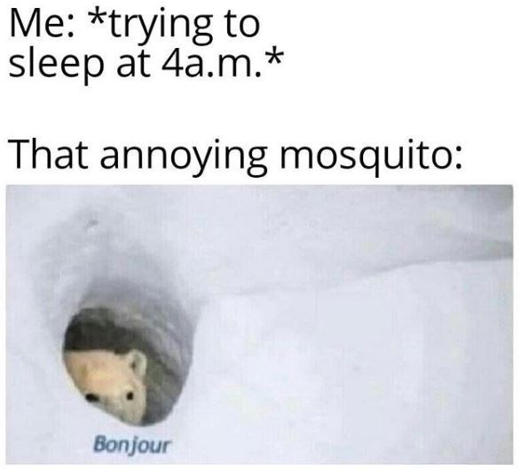 Text - Me: *trying to sleep at 4a.m.* That annoying mosquito: Bonjour