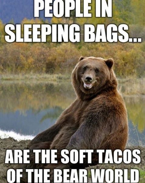 Brown bear - PEOPLE IN SLEEPING BAGS.. ARE THE SOFT TACOS OF THE BEAR WORLD